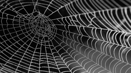 black and whit image of spider web