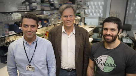 Vasco Sousa, Per Svenningsson and Ioannis Mantas at the Department of Clinical Neuroscience