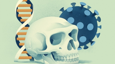 Illustration showing a Neandertal skull, a DNA strand and a coronavirus